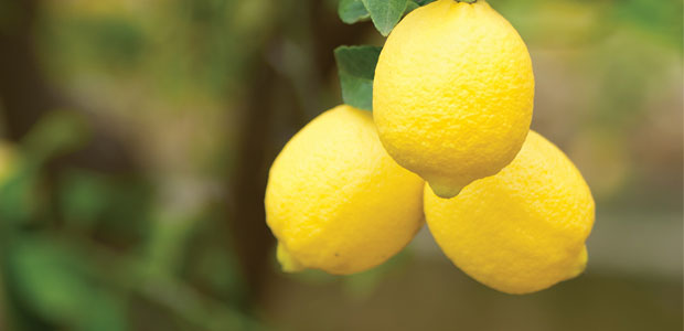 The Delicious Benefits of Lemons