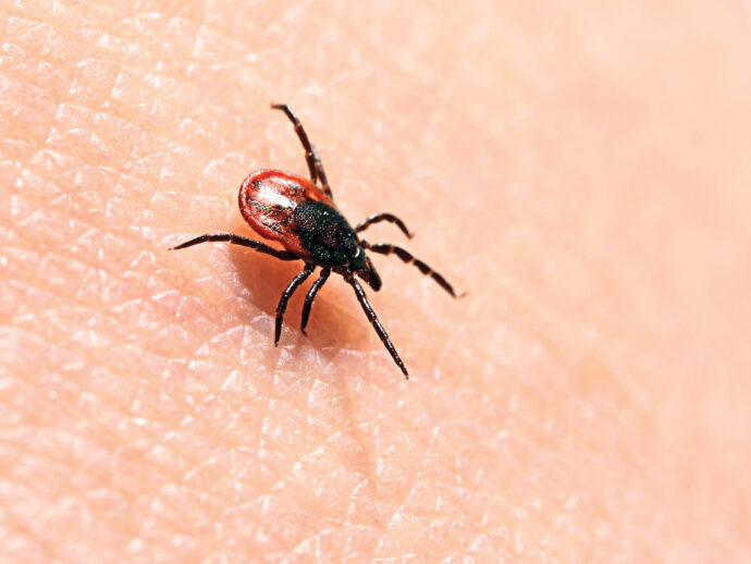 The Growing Threat of Lyme Disease
