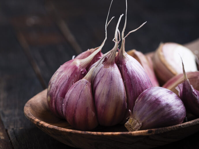 Why Aged Garlic Extract?
